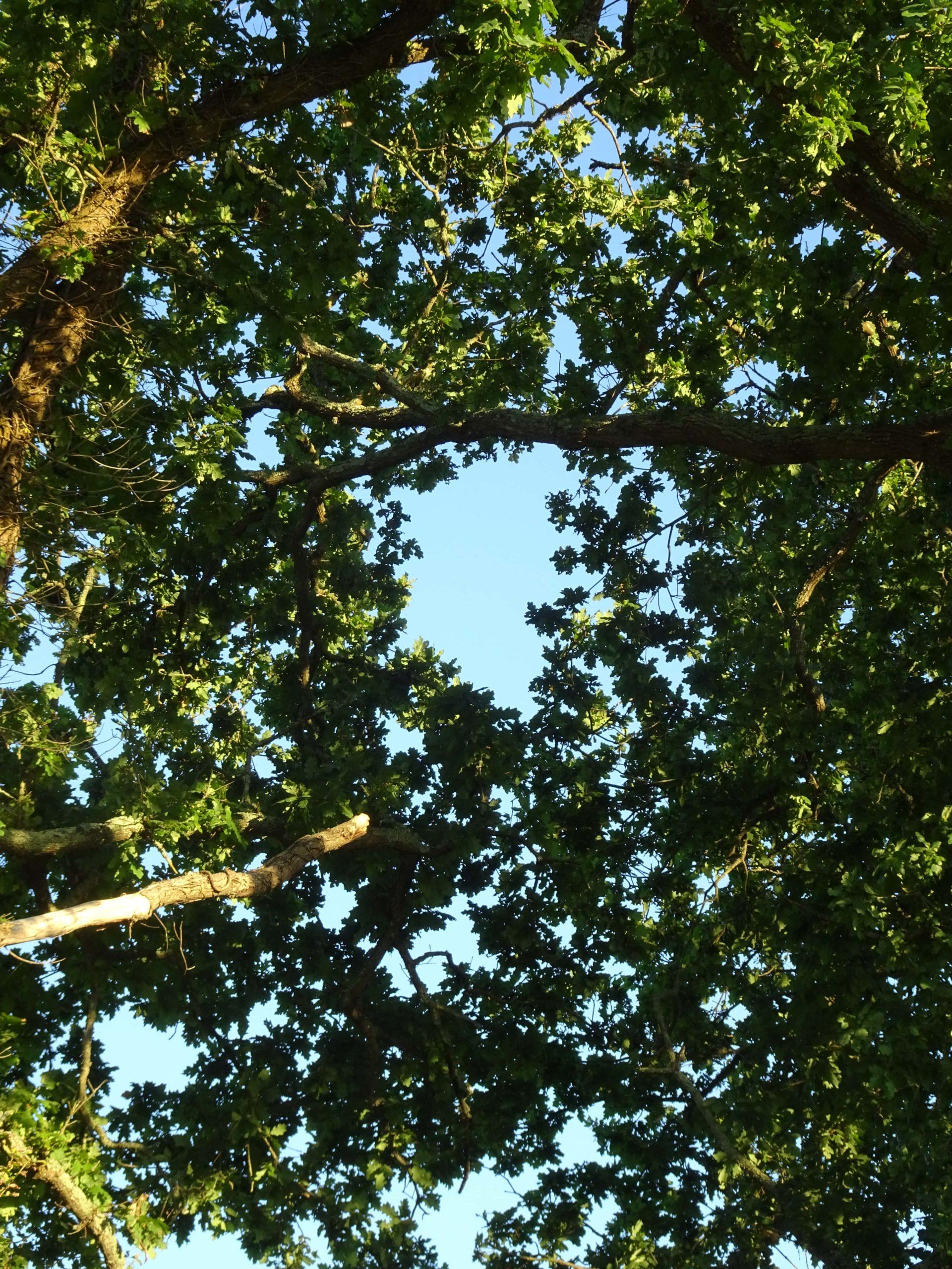 la lumière dans les branches